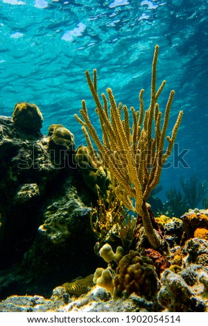 colorful corals, caribbean sea, under water pictures, natural light