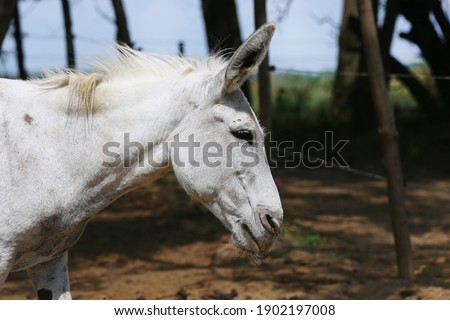Cute donkey pose outdoors in rural farmyard.  Portrait photo of a donkey outdoors rural scene against natural background