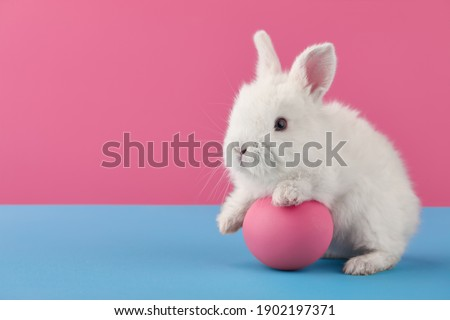 White Easter bunny rabbit with egg on blue and pink background Royalty-Free Stock Photo #1902197371