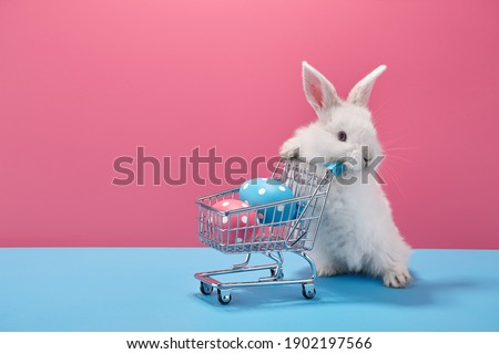 White Easter bunny rabbit with shopping basket and painted eggs on blue and pink background