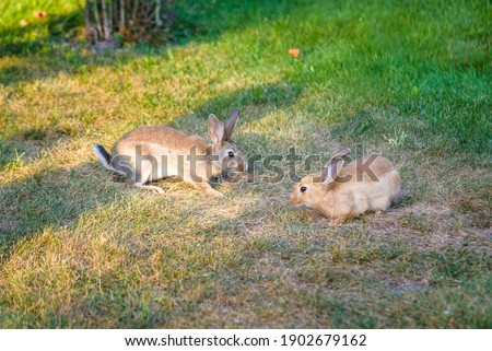 Two sweet little baby bunnies walking on the meadow eating grass, Easter spring background with copy space. #1902679162