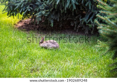 Two sweet little baby bunnies walking on the meadow eating grass, Easter spring background with copy space. #1902689248