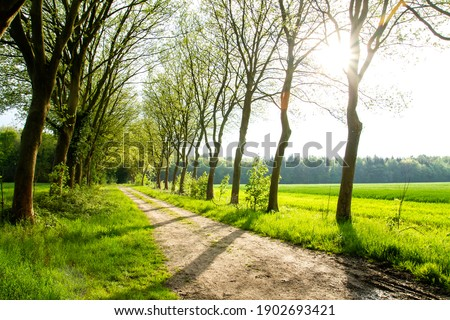 Avenue of London Plane trees in the springtime green countrisde  Royalty-Free Stock Photo #1902693421