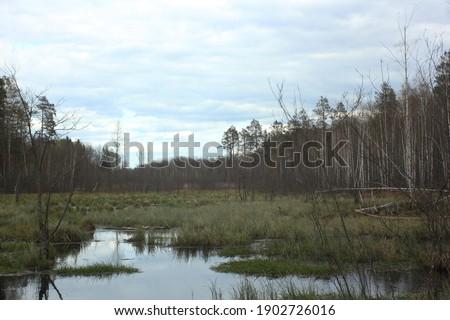 swamp forest in Ukraine landscape