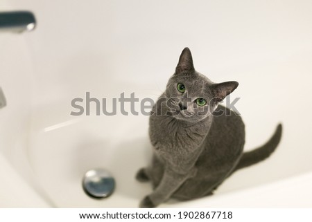 The cat lies in the bath. A purebred cat loves to wash in the bathroom. White bathtub, beautiful green-eyed cat. Royalty-Free Stock Photo #1902867718