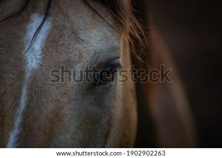 Herd of ranch horses in Montana paint,bay,buckskin, Royalty-Free Stock Photo #1902902263