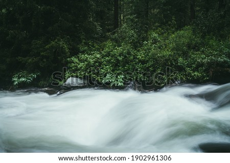 Green forest landscape with wild thickets near powerful mountain river. Blurred power turbulent rapids in mountain creek in dark forest. Atmospheric nature scenery with mountain river and wild flora. Royalty-Free Stock Photo #1902961306