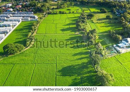Land plot in aerial view. Include landscape, green field, crop, agricultural plant. Tract of land for housing subdivision, residential, development, owned, sale, rent, buy or investment in Chiang Mai. Royalty-Free Stock Photo #1903000657