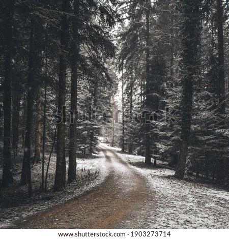 Snowy road in the forest leading into a distance without a clear end in sight. A picture is looking like the road to nowhere  and can be used as a motivational poster Royalty-Free Stock Photo #1903273714