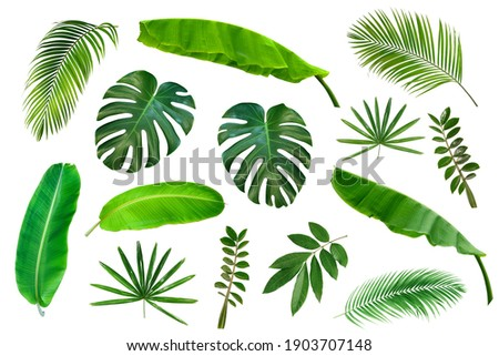 Set of Tropical leaves isolated on white background. Tropical exotic foliage for advertising design. Royalty-Free Stock Photo #1903707148