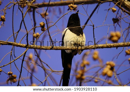 a picture of a bird on a branch in a park