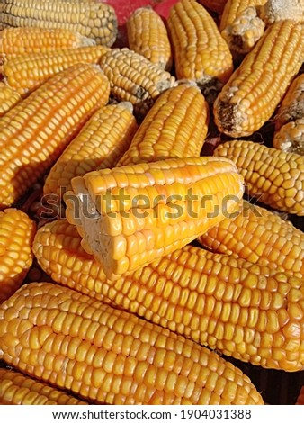 Close up capture of yellow corn. Photography of corn product. Beautiful yellow ripe corn pile. Fresh corn picture.
