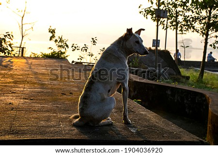 Picture of aspin dog sitting in a park and staring people .