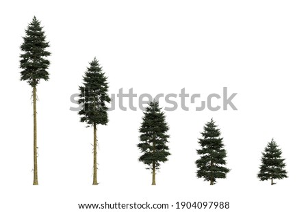 Isolated Douglas firs of different ages Royalty-Free Stock Photo #1904097988