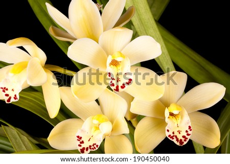Yellow orchids #190450040