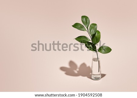 Green leaf and vase minimal summer or spring still life on pastel pink table. Sunlight, hard shadow. Floral, interior, nature concept Royalty-Free Stock Photo #1904592508