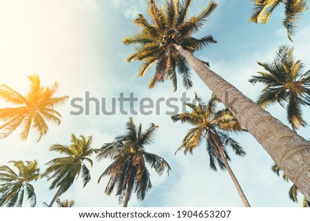 Tropical palm tree with sun light on sunset sky and cloud abstract background. Summer vacation and nature travel adventure concept. Pastel tone filter effect color style. Royalty-Free Stock Photo #1904653207