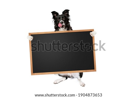 standing border collie dog holding a blank banner,placard or blackboard, isolated on white background