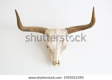 a skull of a cow with horns against a white wall Royalty-Free Stock Photo #1905052390
