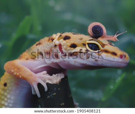 a leopard gecko stands on the twig with a snail on its head.  green blurry background picture