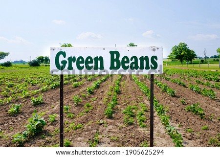 Green beans sign board at farm for pick up. Agriculture and ecology background.