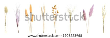 Set with beautiful decorative dry flowers on white background, banner design  Royalty-Free Stock Photo #1906223968