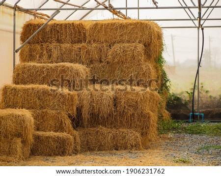 Haystack, a bale of hay group. Agriculture farm and farming symbol of harvest time with dry grass (hay),  hay pile of dried grass hay straw.  Royalty-Free Stock Photo #1906231762