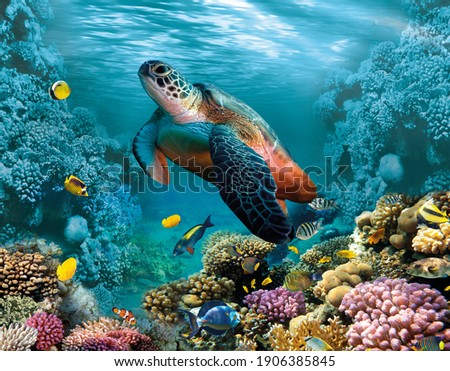 Image for 3d floor. Underwater world. Turtle. corals. Royalty-Free Stock Photo #1906385845