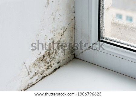 Mold in the corner of the plastic windows. Royalty-Free Stock Photo #1906796623