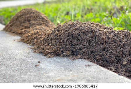 These mounds belong to the fire ants and are difficult to get rid of. The ants sting and hurt when they do.