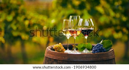Three glasses with white, rose and red wine on a wooden barrel in the vineyard. Wide photo Royalty-Free Stock Photo #1906934800