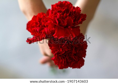 Top view of woman holding red carnations. Revolution and April 25 concept Royalty-Free Stock Photo #1907143603