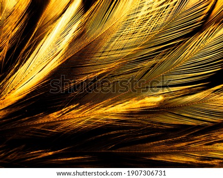 Beautiful abstract white and brown feathers on black background, soft yellow feather texture on white pattern and yellow background, feather background, gold feathers banners Royalty-Free Stock Photo #1907306731