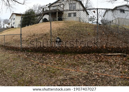A husky dog standing behind a fence. He is in a backyard. Houses are behind him. Picture taken in St. Peters, Missouri.