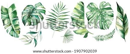 Watercolor tropical leaves. Botanical jungle illustration. Exotic. watercolor set Royalty-Free Stock Photo #1907902039