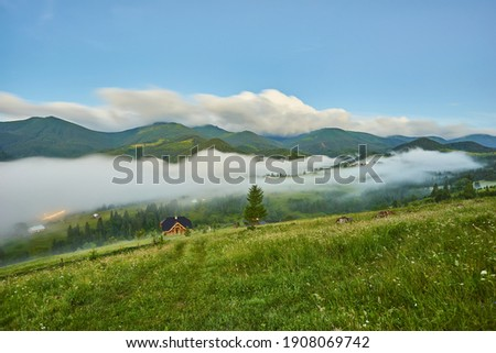 gorgeous foggy sunrise in Carpathian mountains. lovely summer landscape of Volovets district. purple flowers on grassy meadows and forested hill in fog. mountain Pikui in the distance. Royalty-Free Stock Photo #1908069742