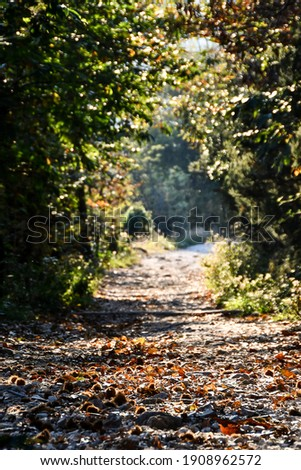 autumn in forest, beautiful photo digital picture