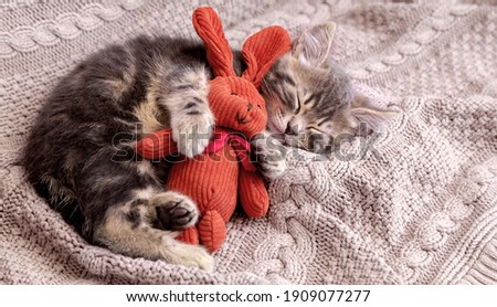 Kitten sleep on cozy blanket hug toy easter bunny. Fluffy tabby kitten snoozing comfortably with plush rabbit hare on knitted pink bed. Cat sweet dreams Copy space Royalty-Free Stock Photo #1909077277