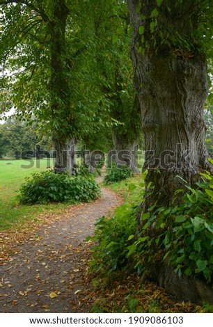 Very narrow lime tree avenue or allee with a winding footpath in Warin, Mecklenburg-Western Pomerania, Germany Royalty-Free Stock Photo #1909086103