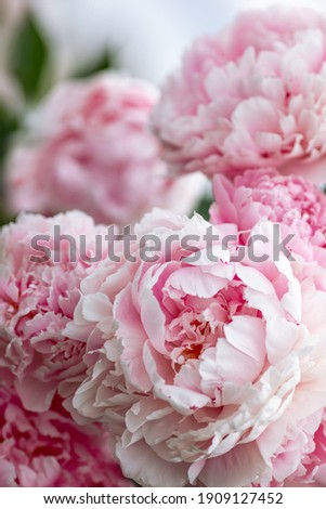 Close-up of flowers Pink peonies . Beautiful peony flower for catalog or online store. Floral shop concept . Beautiful fresh cut bouquet. Flowers deliver.