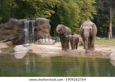 indian elephants at the zoo Royalty-Free Stock Photo #1909262764