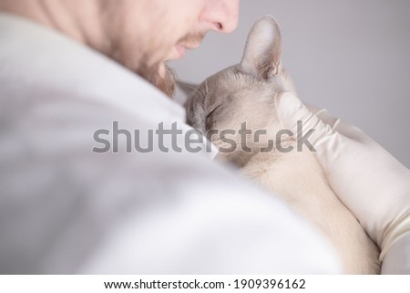 Veterinarian is holding a Burmese cat. Royalty-Free Stock Photo #1909396162