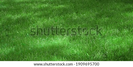 Garden Backyard Park Shady Fresh Lawn Green Wide Background Or Texture. Picnic Family Place Green Area. Meadow Banner. Lawn Made From Turf Or Sod. Focus Selective. Royalty-Free Stock Photo #1909695700