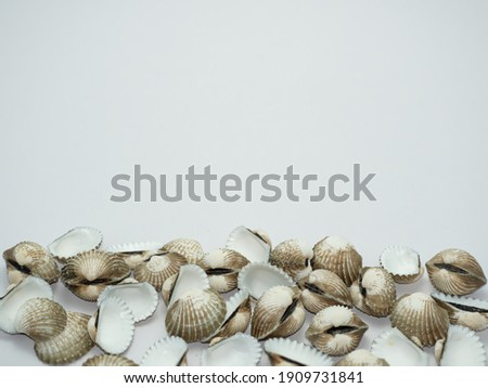 Piles of Thai cockle shells and Thai cockles body placed on a white background. Leave the top of the picture to be useful.