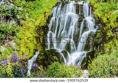beautiful flowers of Vidae Waterfall at Crater Lake National Park  Royalty-Free Stock Photo #1909763539