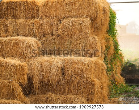 Haystack, a bale of hay group. Agriculture farm and farming symbol of harvest time with dry grass (hay),  hay pile of dried grass hay straw.  Royalty-Free Stock Photo #1909927573