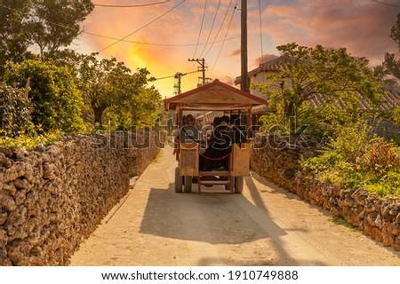 Buffalo carriage for sightseeing in taketomi island, Okinawa, Japan Royalty-Free Stock Photo #1910749888