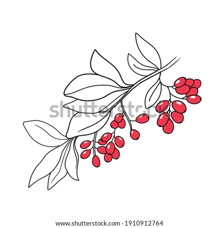 vector illustration plant barberry hand line contour on white background Royalty-Free Stock Photo #1910912764