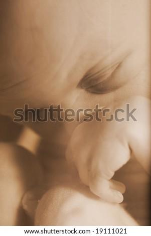 Embryo #19111021