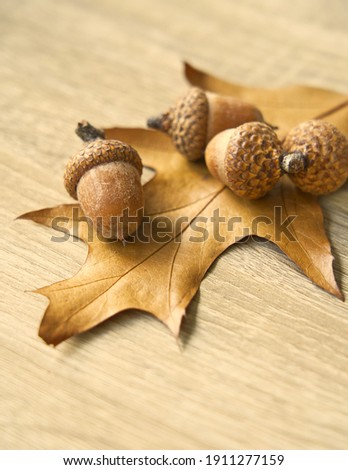 Four ripe acorns on a yellow oak leaf, wooden background, vertical picture